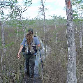Hiking the Florida National Scenic Trail through Big Cypress National Preserve.