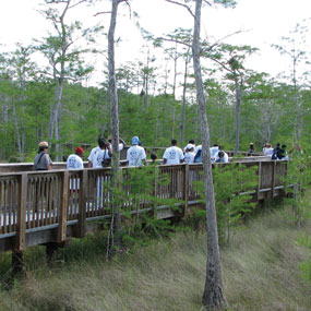 group of people on a board walk going over a wet area surrounded by trees