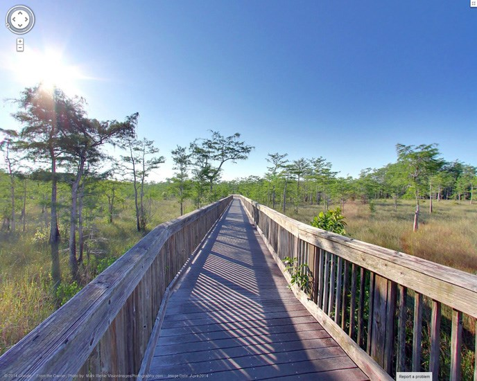 A wooden boardwalk with tall  grass and trees on either side stretches to the horizon.