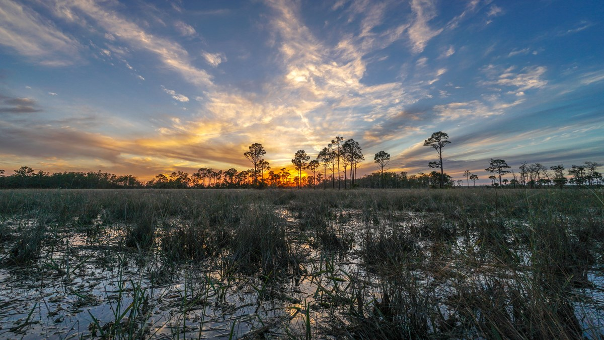Green Groups Urge Haaland to Reject Drilling in the Everglades