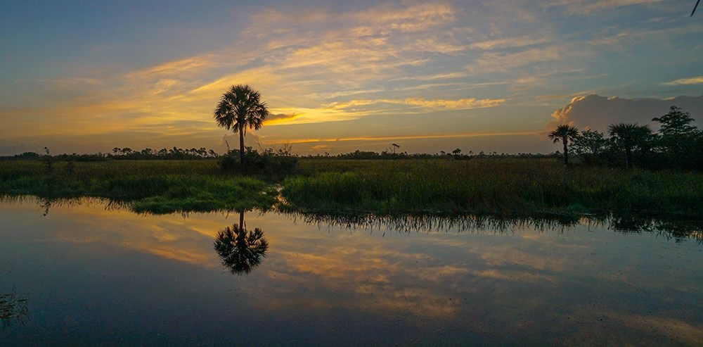 sunset across water to a swampy area with one prominent tree