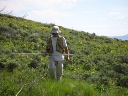 A biologist monitoring rare plant species on a grassy hillside.
