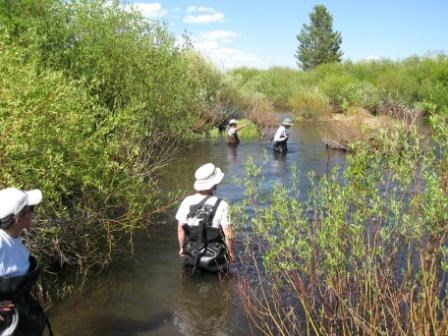 A team of four scientists in a river surrounded by willows.