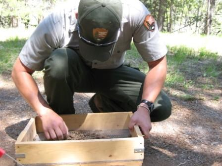 A male park ranger sifting through soil in a wooden container.