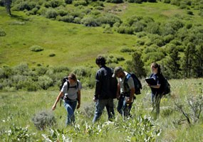 Four citizen scientists identifying plants on a grassy hillside.