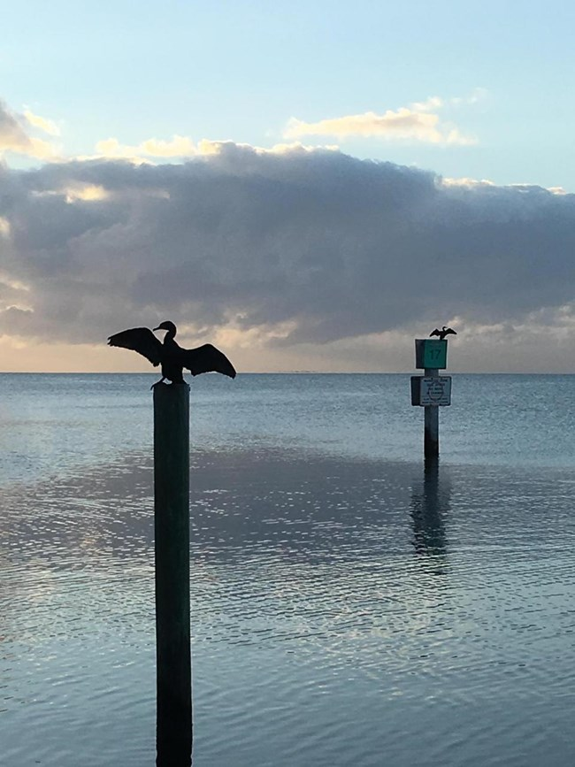 Two channel markers with brids sitting on top in silhouette. Ocean and sky in the background.