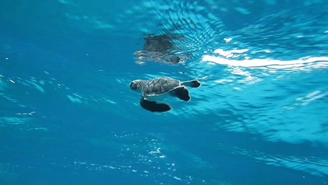 Sea turtle journey