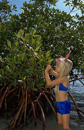 A girl explores the red mangroves in Biscayne National Park.