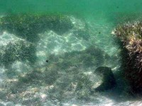 Blowhole in seagrass habitat.