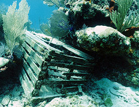 Abandoned lobster trap lodged in coral reef.