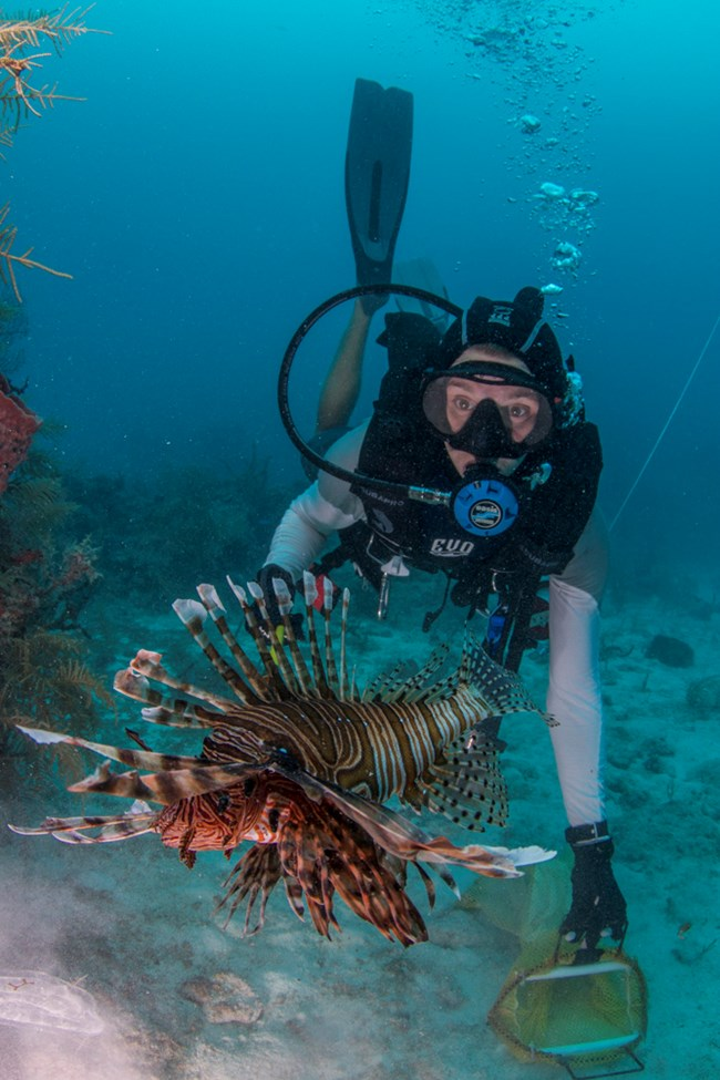 invasive lionfish in park