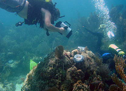 Divers conduct research on coral reproduction and settlement.