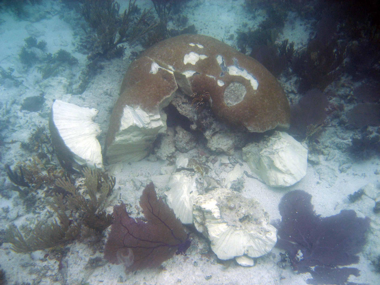 Coral Reef Restoration Biscayne National Park U S