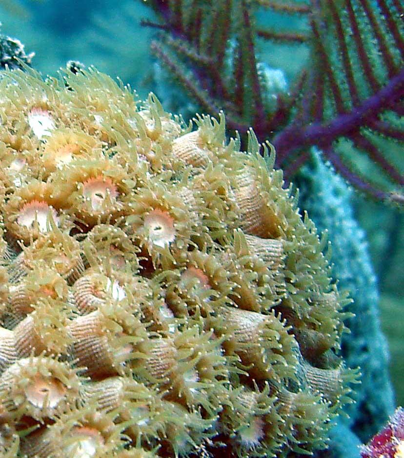 Coral Reefs - Biscayne National Park (U.S. National Park Service)