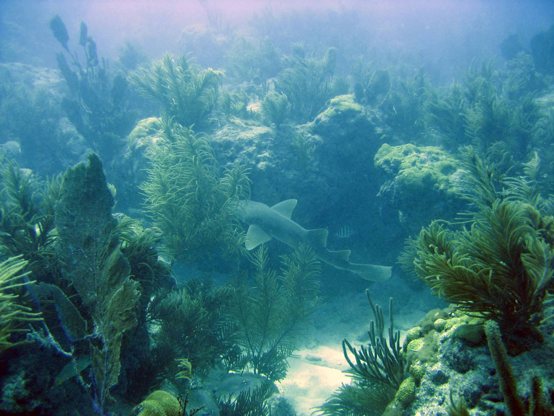 Coral Reefs Biscayne National Park U S National Park