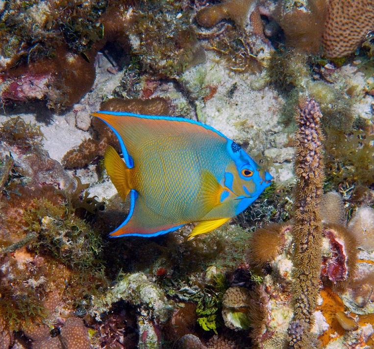 coral reefs biscayne national park us national park