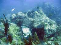 Reconstructed reef