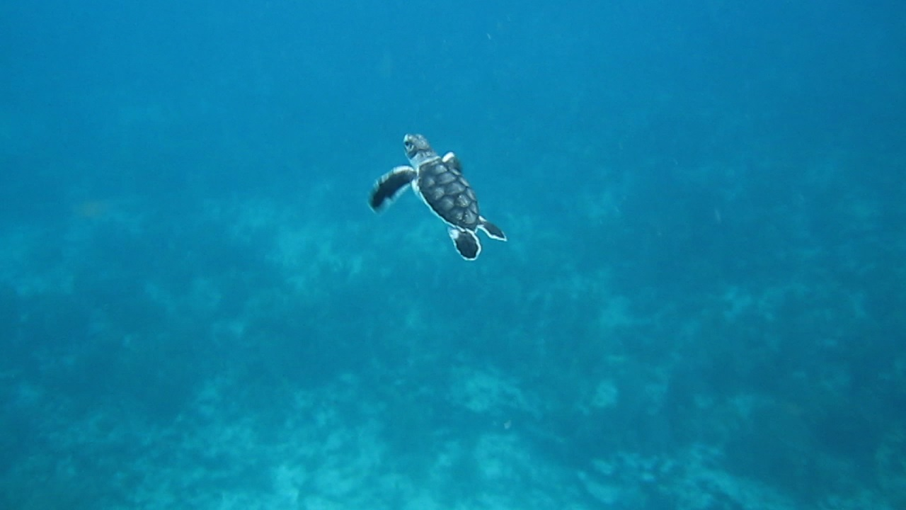 sea turtle adventure beginning