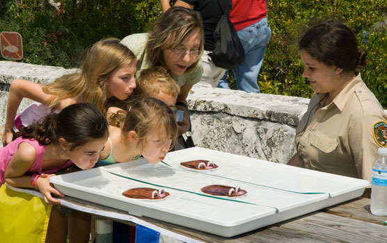 Participants in the April 2009 Family Fun Fest make models of marsh rabbits swim across the water.