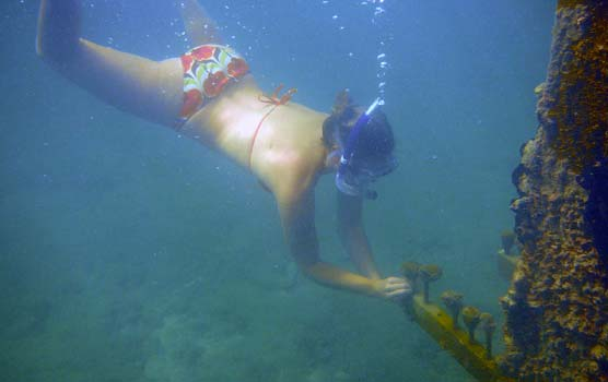 A volunteer dives down to replace a coral popsicle in Biscayne National Park's coral nursery.