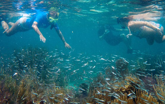 Snorkelers explore a shallow reef with lots of fish.