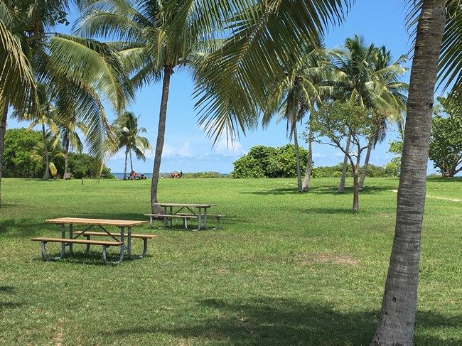 Open grassy area dotted with palm trees, ocean visible on the horizon