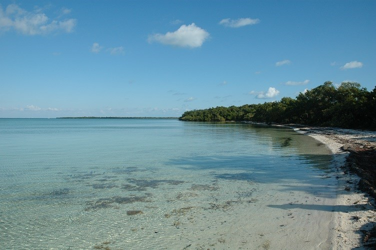 Clear shallow bay waters with a small strip of beach and mangroves in the distance
