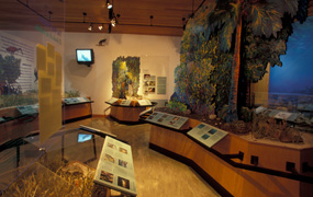 Interior view of Dante Fascell Visitor Center museum.