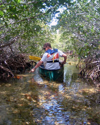 A canoer paddles through a mangrove channel in Jones Lagoon.