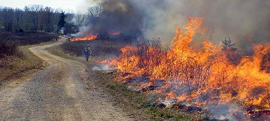 Firefighters ignite a prescribed fire within Big South Fork.