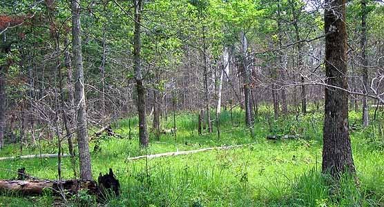 Upland Vegetation Zone Big South Fork National River