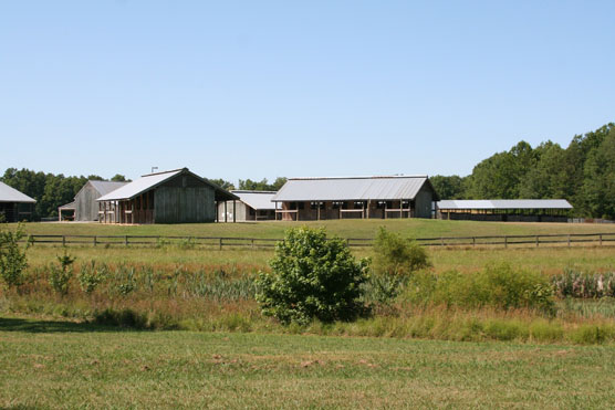 Bandy Creek Stables Photo