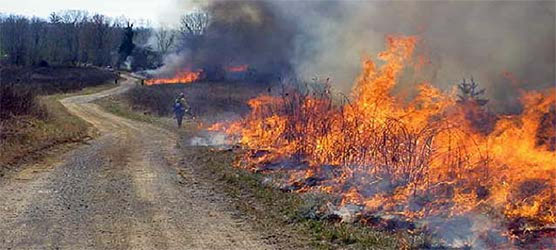prescribed fire near bandy creek
