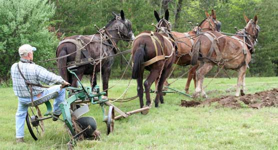 Man using mules to plow a field.