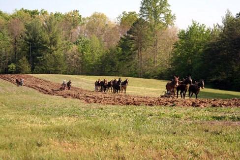 mule teams work