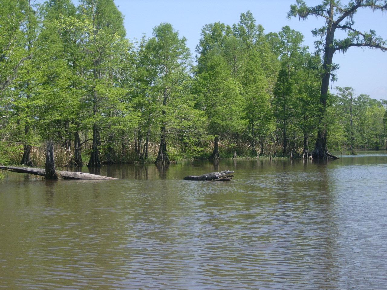 Wetland conservation