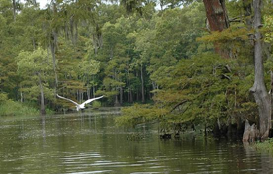 Big Thicket Waterway with Bird