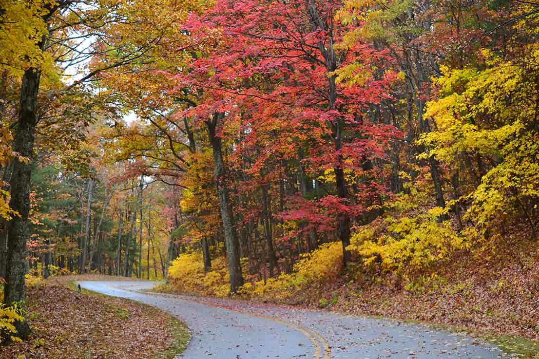 A road winding though trees cloaked in vibrant red and yellow autumn leaves