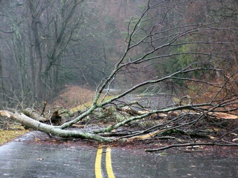 Broken branch blocking Parkway road after storm.