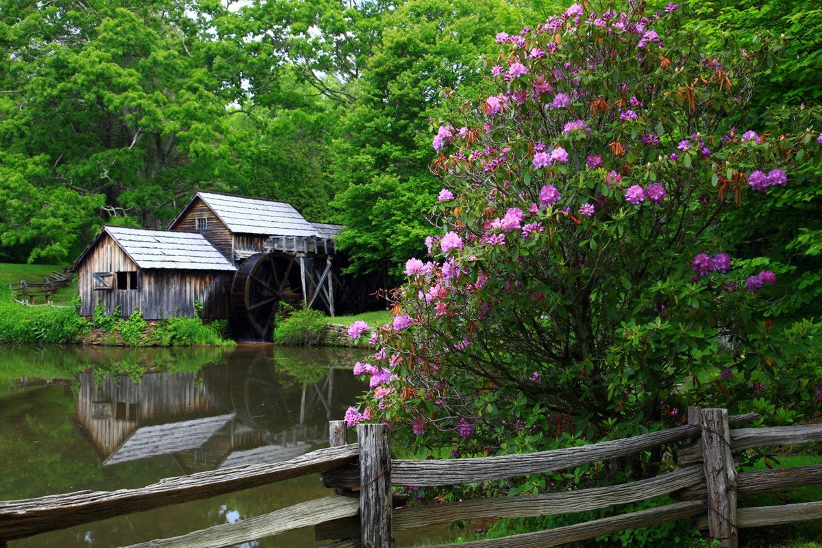 Mabry Mill with reflection in pond and pink flowers