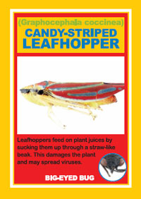 Leafhopper playing card from Boston Harbor Islands