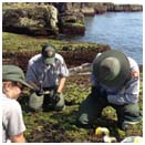 NPS Biotechs investigate the rocky intertidal zone