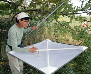 A researcher demonstrates how to use a beating sheet to collect insects.