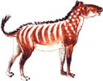 Hip Wimpee (Hyracotherium)