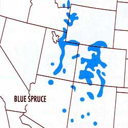 Map depicting the range of the Blue Spruce Tree