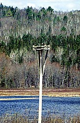 Osprey Nesting Platform near a body of water