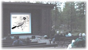 Ranger conducting evening program at outdoor amphitheater located at Sunset campground