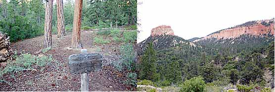 Right Fork Swamp Canyon campsite and view of red cliff butte.