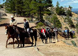 Mule and Horse Riders Returning from Trip into the canyon