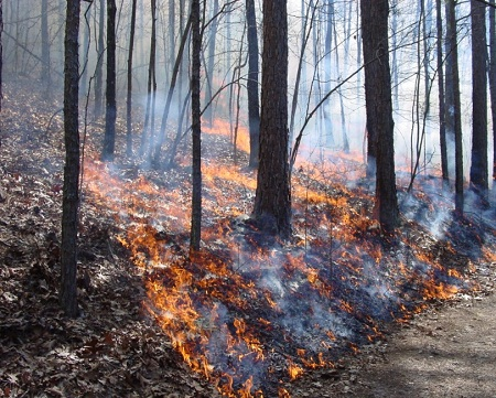 color photo of low orange flames burning leaves among forest trees
